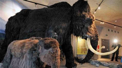 Russian boy discovers mammoth in Siberian permafrost
