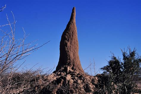 2,200 Year Old Termite Mound Discovered in Central Africa